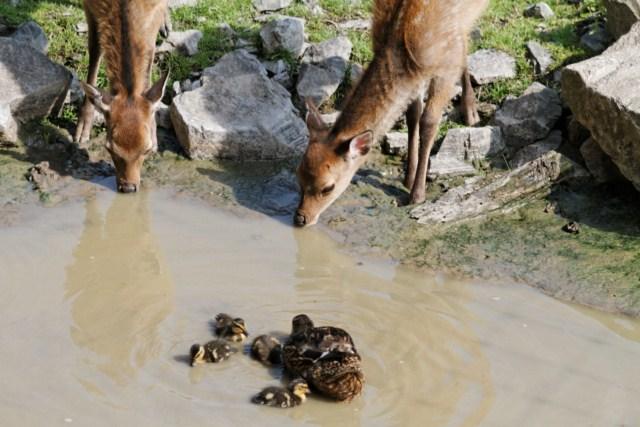 Zoo du Pal (Allier: Dompierre sur Besbre) 808086IMG_5893_DxO__640x480_