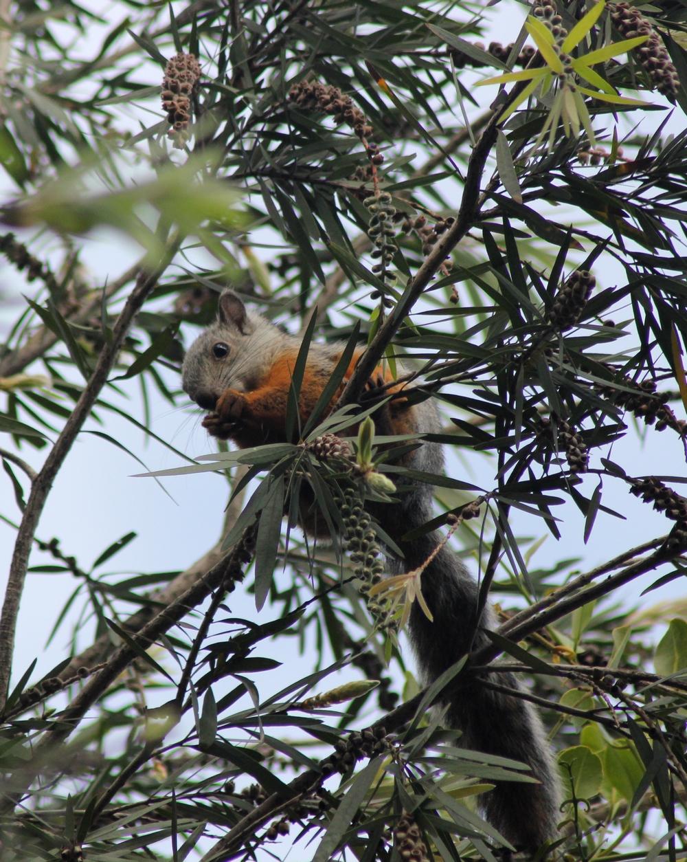 15 jours dans la jungle du Costa Rica 808442ecu2r