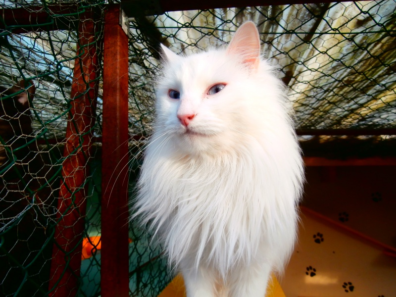 SNOW (chatte blanche) 808987P1142036