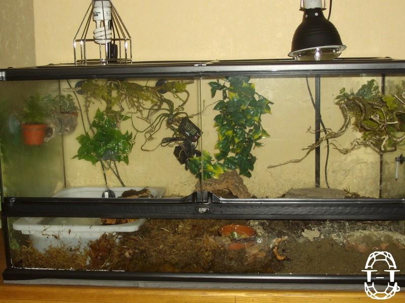 Regroupement des photos d'aquaterrariums espèces palustres 809335imgp0333