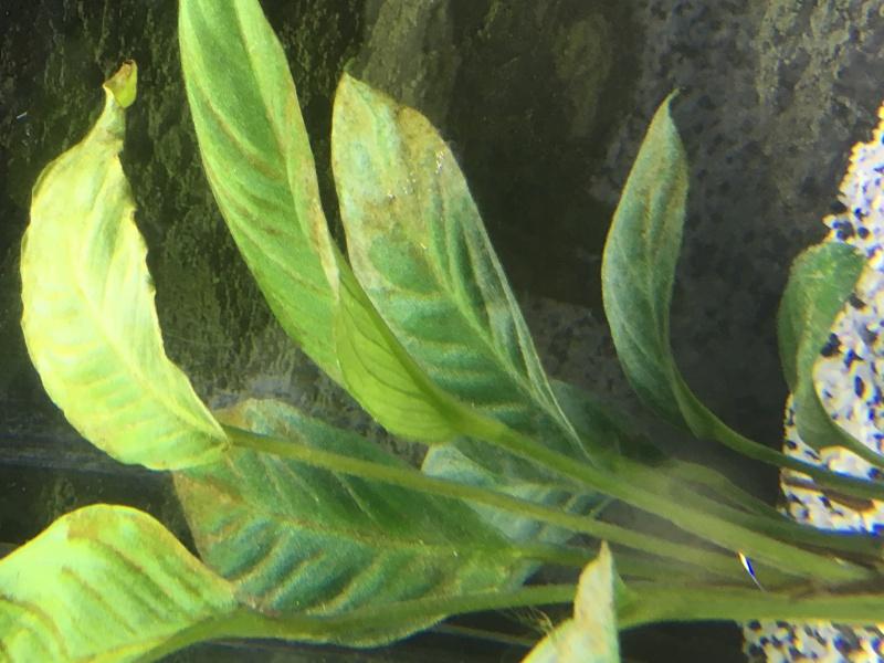 Problème d'algues après 2 semaines en eau 809770IMG0127