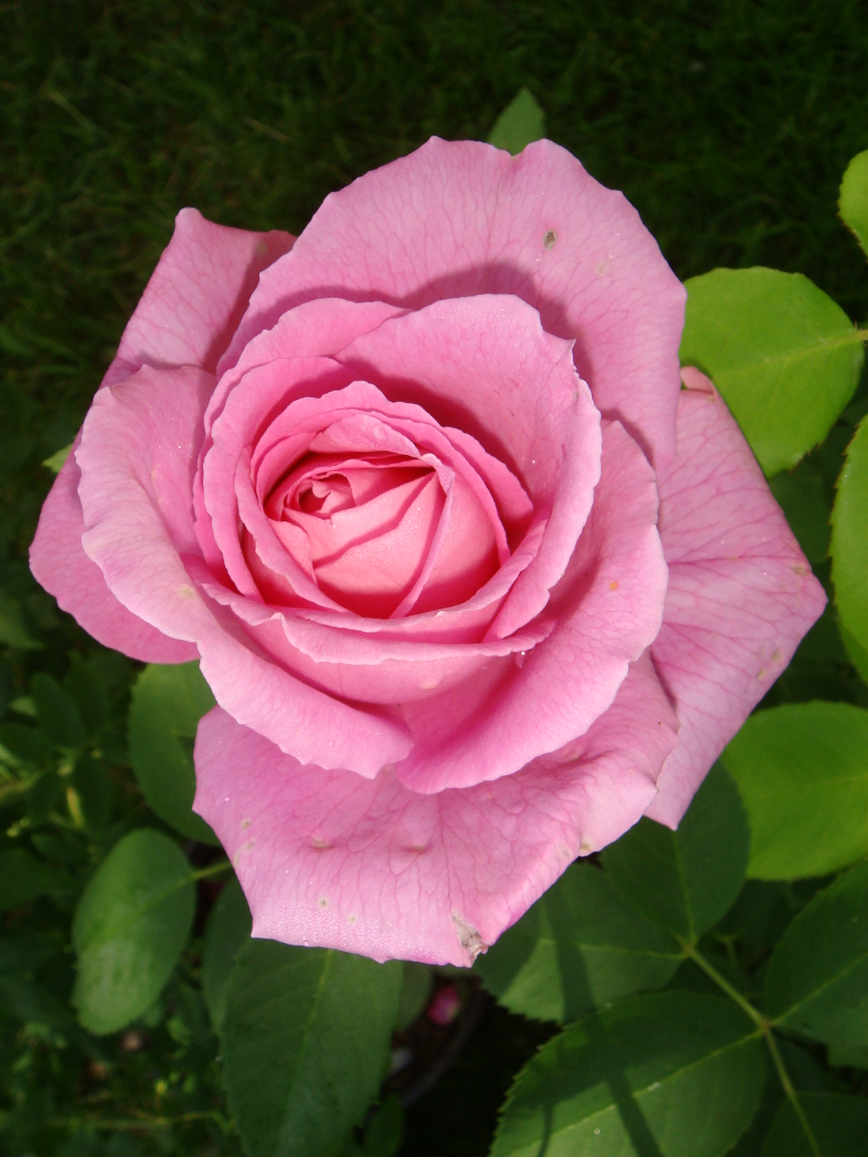 [Fil Ouvert] Fleurs 813002DSC07953