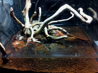Nanocube 20L Wood & stone 8144422014022511