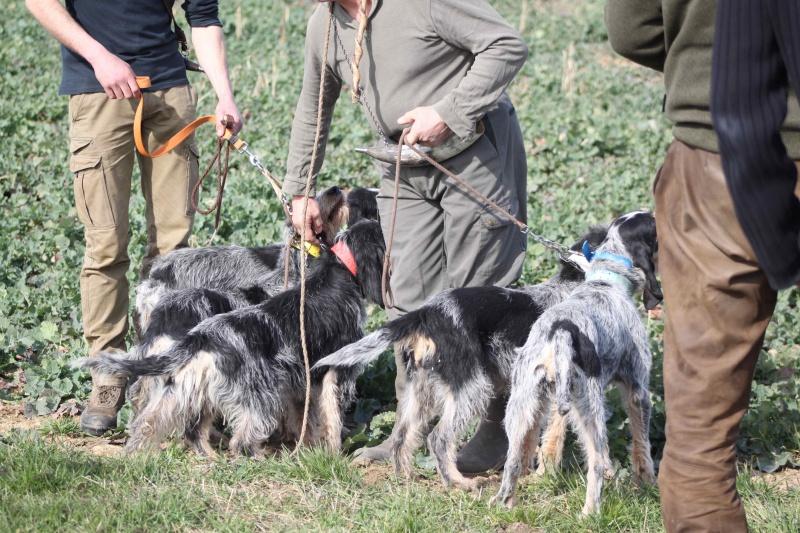 Brevet de chasse sur lièvre Marnay (71) 7 et 8 mars 2015 814791IMG6581