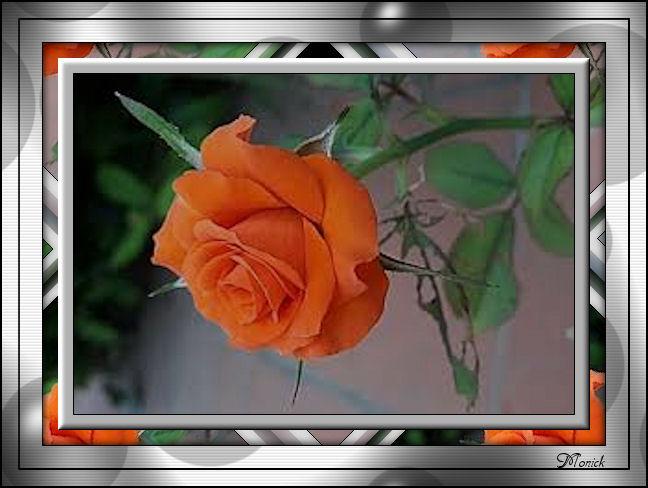 Ma rose (cadre Psp) 817062marose