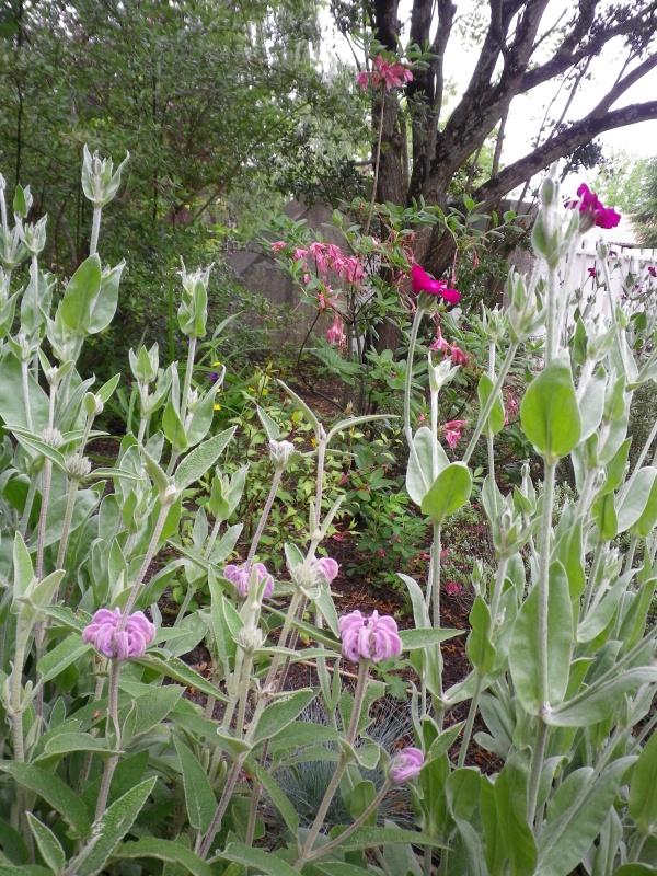 joli mois de mai, le jardin fait à son gré - Page 4 817135IMGP4602