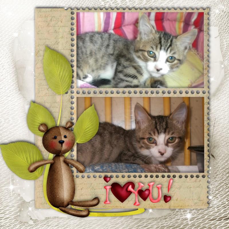 MIKA (chaton tigré et blanc) 819699Mika