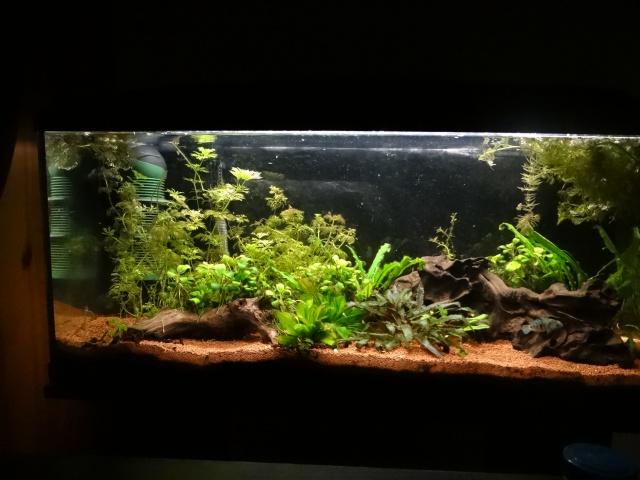 Ma Fish'étagère et les autres  - Page 6 821755DSC07080