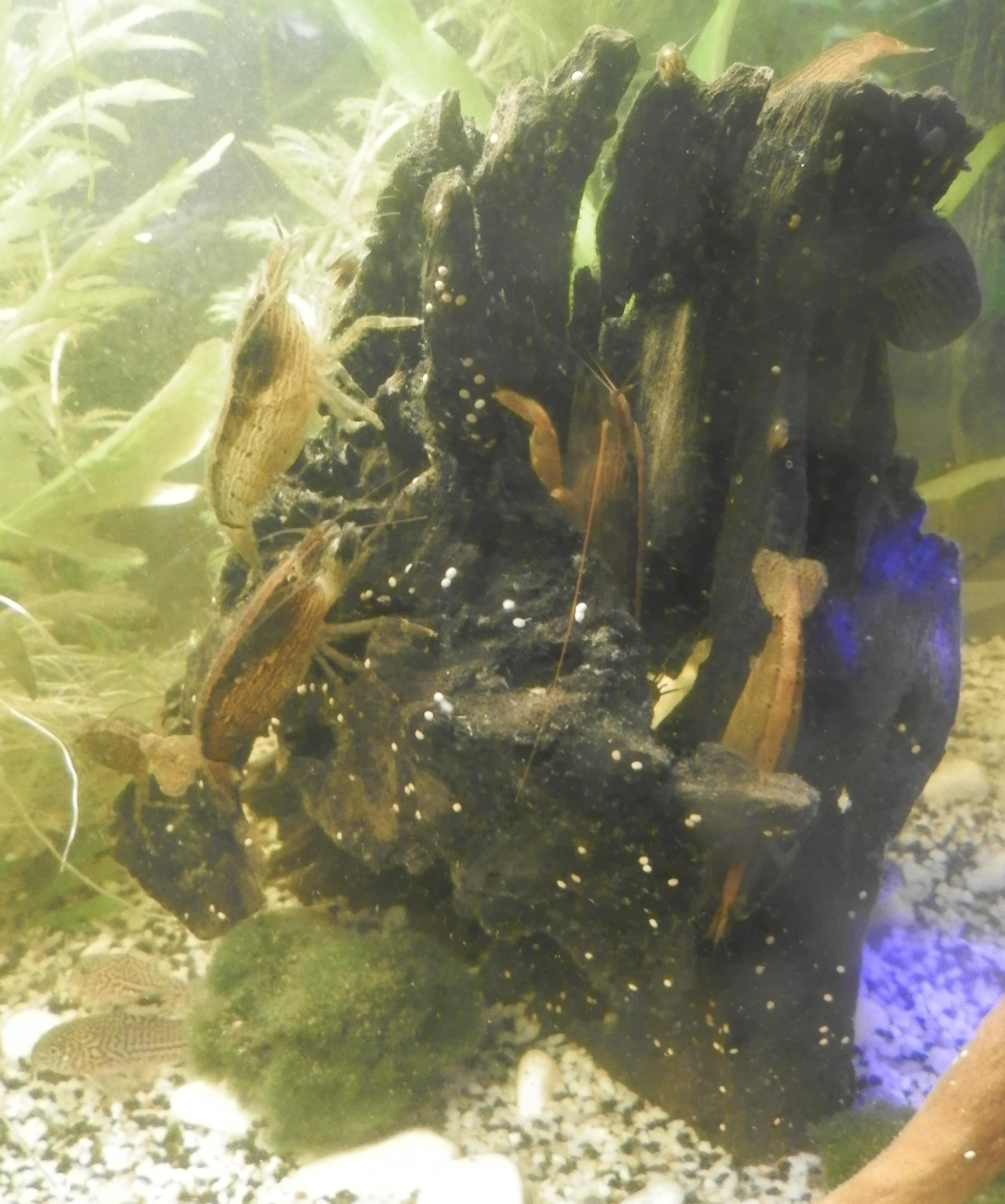 [Présentation] Tous les trous mènent aux crevettes Bambou 8320054546