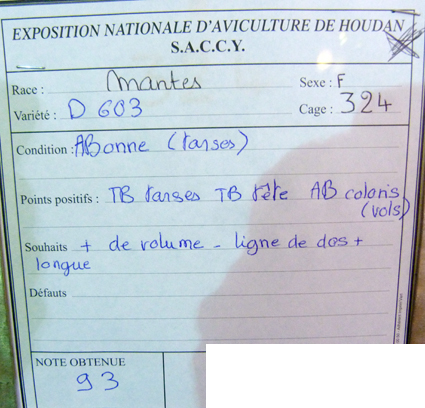 exposition d'aviculture Foire ST MATTHIEU 27 et 28 Septembre 2014 - Page 3 833195P1150654