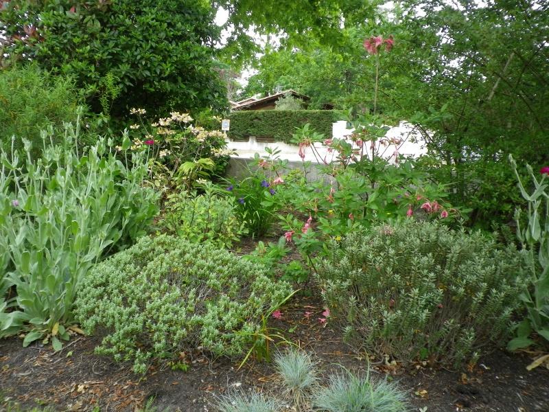 joli mois de mai, le jardin fait à son gré - Page 4 834125IMGP4603