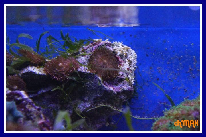 ce que j'amène en coraux a orchie  837581PXRIMG0024GF