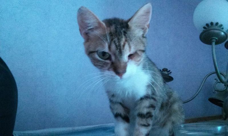 DUCHESSE - chatte femelle, née 2011/2012, borgne - (PASCANI) - adoptée par Chantal Pascal (dpt 63) - Page 3 8381333837