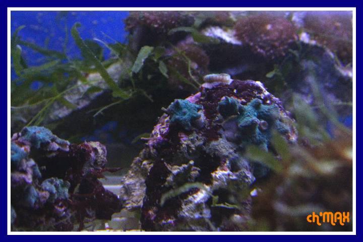 ce que j'amène en coraux a orchie  838211PXRIMG0022GF