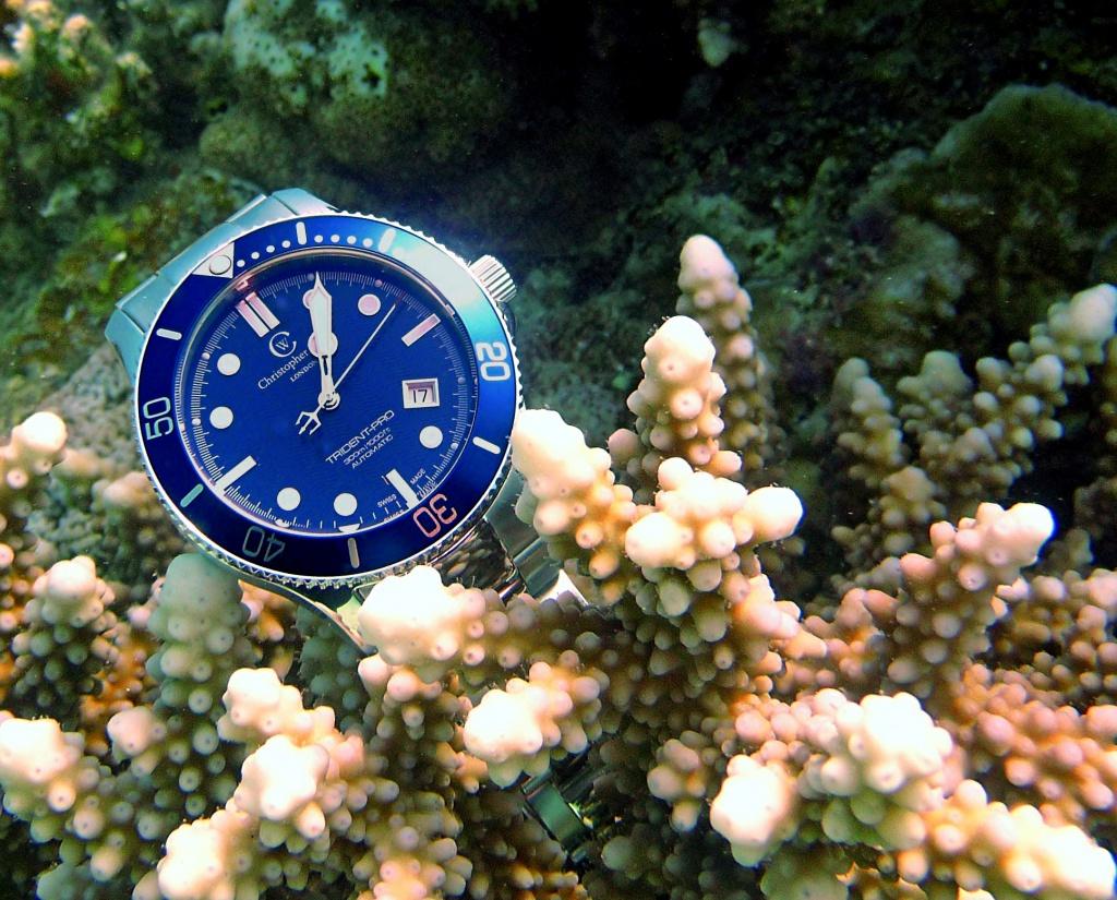 Aimez vous les bleues???!!!  - Page 2 839963C60FLE3