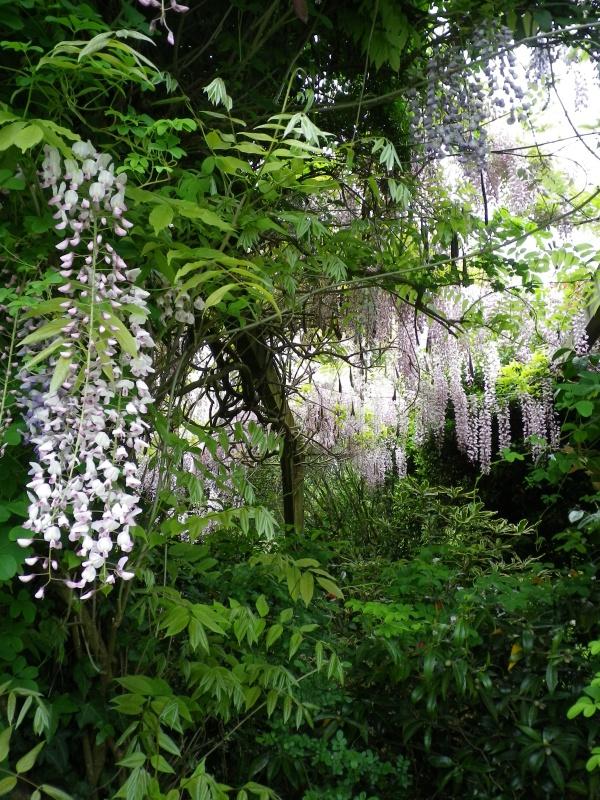 (40) Plantarium et chemin de ronde - Gaujacq - Page 2 841906IMGP4521