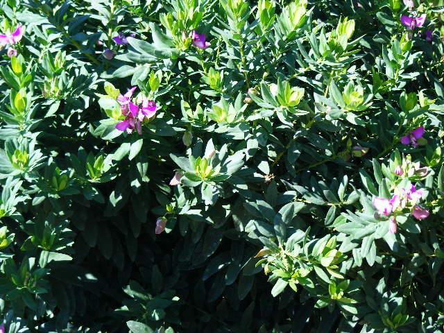 Balade à Menton le 12/09/2010. 844659expo_jardin__12.09.2010._006
