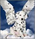 Puppy Star 845246avatarpuupy