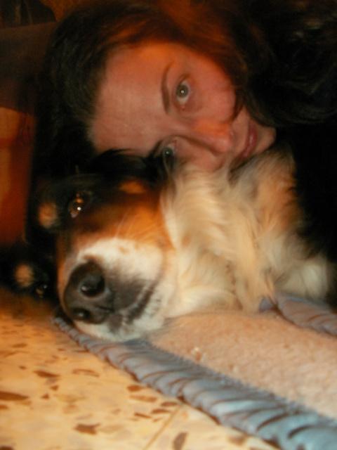 Palie chienne Border x Berger Australien dans le 04 REPLACEE !!!! 852896PICT0944