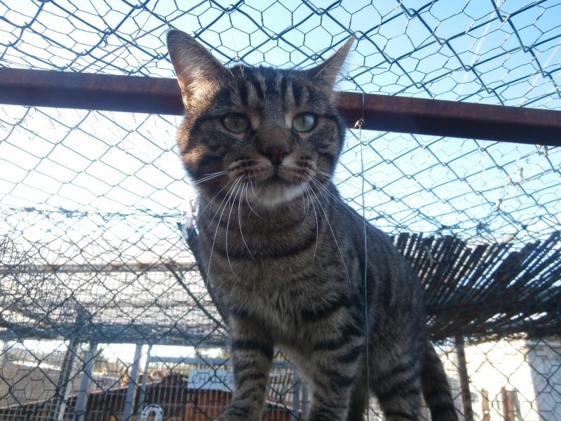 Mickey ( mâle européen tigré) 856508PC285408
