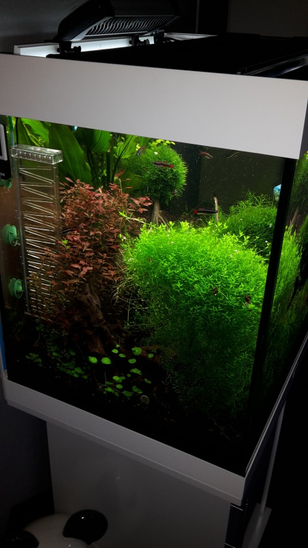 Juwel Lido 200 (Asiatique) - Daytime LED 80w - JBL i1501 - Page 5 86229920150723210454