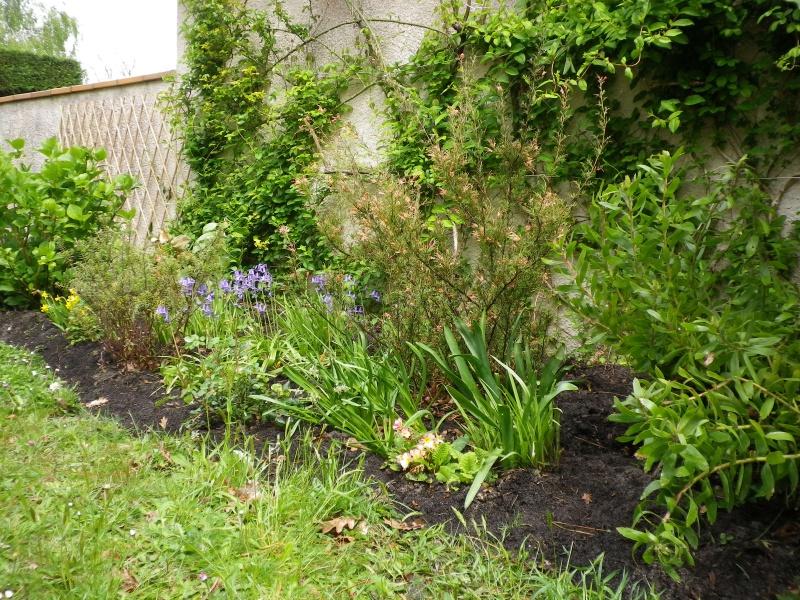 avril, jardin fébrile - Page 4 864624IMGP4046