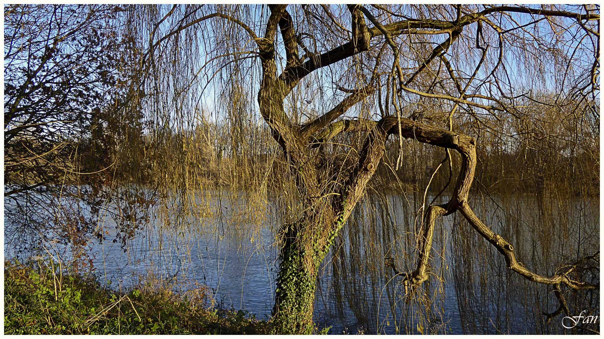 Paysage et nature des yvelines 865112P1010805bis