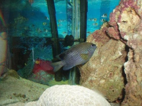 agressivité des poissons 865424PB300018