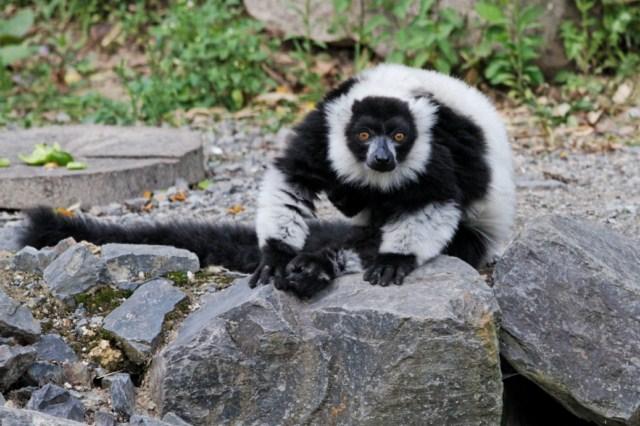 Zoo du Pal (Allier: Dompierre sur Besbre) 871798IMG_5992_DxO__640x480_