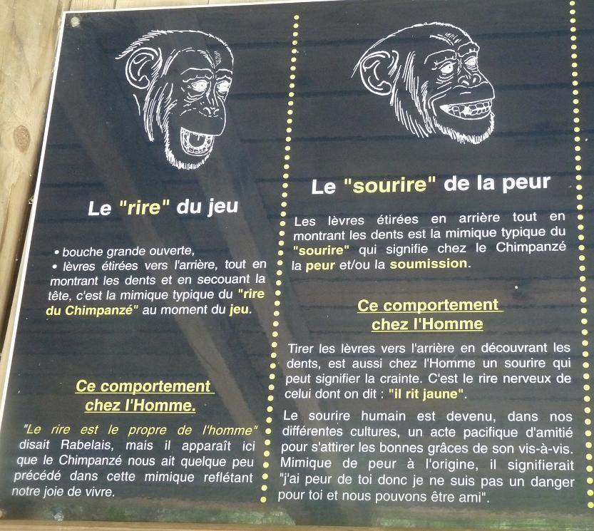 """NARBONNE EN PASSANT PAR LA RESERVE AFRICAINE DE SIGEAN C"""" EST  DROLEMENT FUN - Page 5 871995P1180325"""
