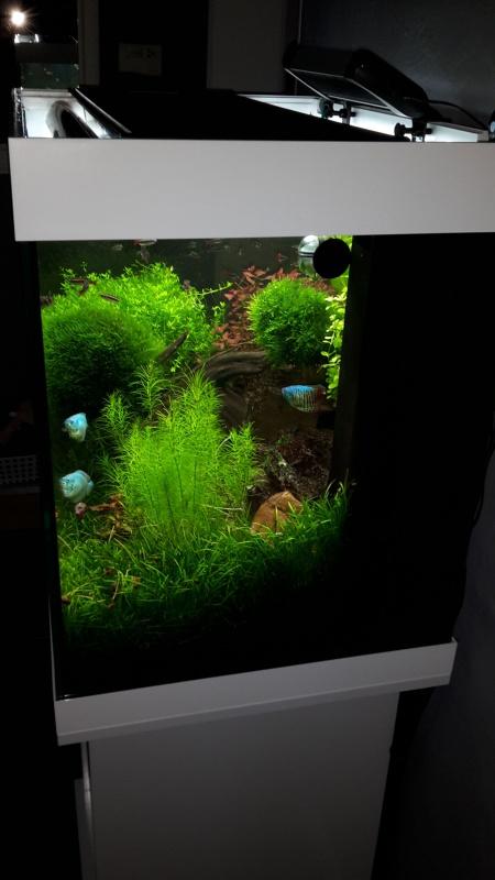 Juwel Lido 200 (Asiatique) - Daytime LED 80w - JBL i1501 - Page 5 87569620150723210442