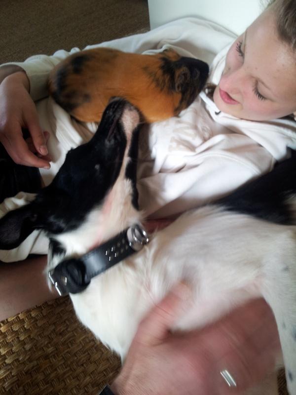 Pepita, née en septembre 2012 87608720130510184418