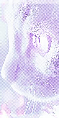 Nuage Poudré [ABS]