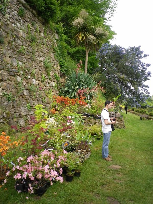 (40) Plantarium et chemin de ronde - Gaujacq - Page 2 877252IMGP4517