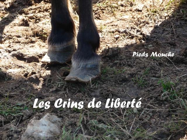 (Dept19) MOUCHE, Ponette ONC 14 ans, sauvé par Dino27 !!! (Sept 2014)décédé - Page 3 878210P1040519