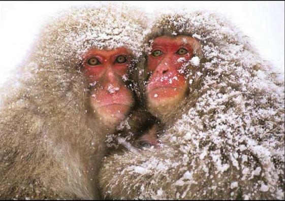 Les Sïnges en Hiver : L'Hivernale nocturne des Gogo le 9 janvier 2016  878954Capturedcran20151101142441