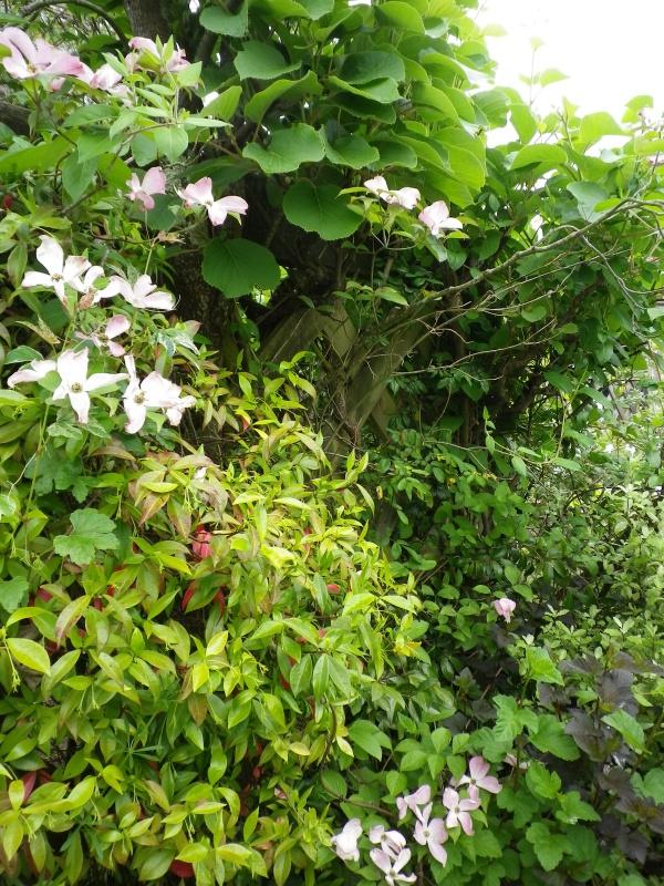 (40) Plantarium et chemin de ronde - Gaujacq - Page 2 879011IMGP4512