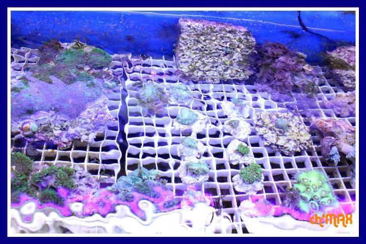 ce que j'amène en coraux a orchie  879144PXRIMG0009GF