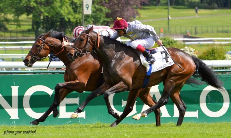 Prix Ganay 2014 (Gr. I, Longchamp) 27-04 : Cirrus des Aigles (+photos) 881182219001