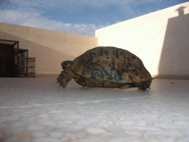 nouvelle tortue ! 881211DSCF1308