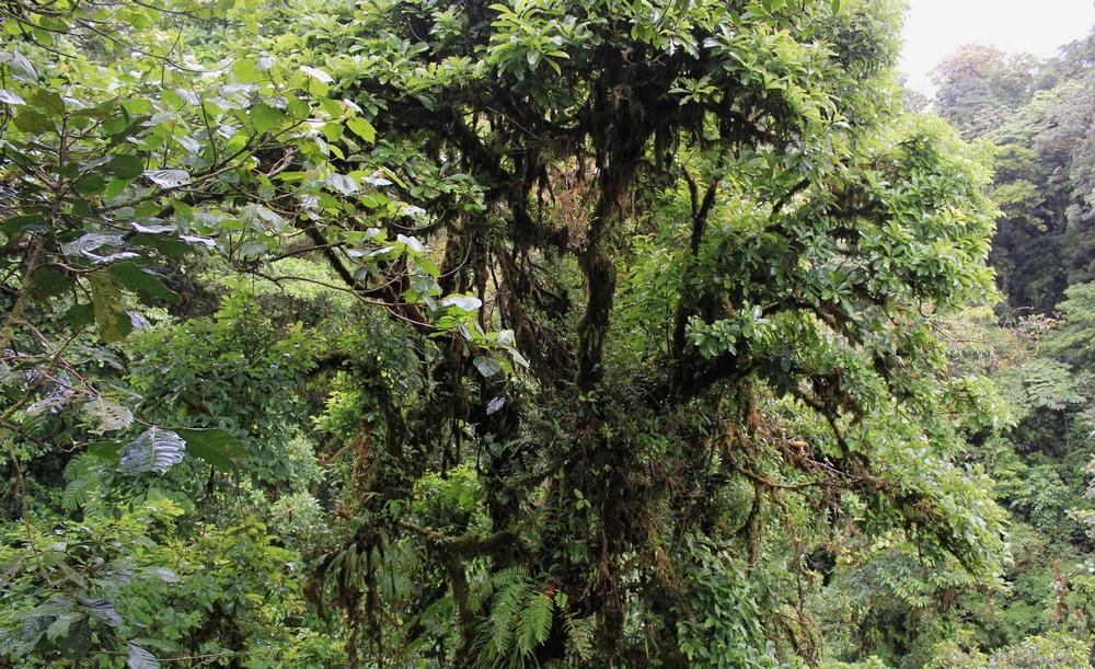 15 jours dans la jungle du Costa Rica - Page 2 881568santa1