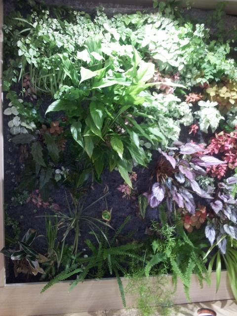 Le nouveau mur végétal de Olivetzou (projet fini à 98%) enfin les leds - Page 3 88318220130823144107