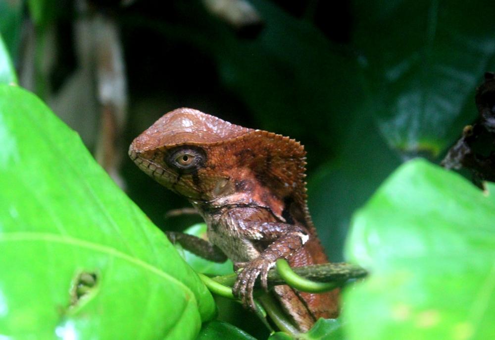 15 jours dans la jungle du Costa Rica 887384cristo1r