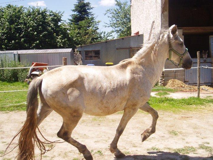 OURAGAN - ONC né en 2001 - adopté en juillet 2011 par Katerine - Page 3 8882502614711335036933964671000021051024822369825386429n