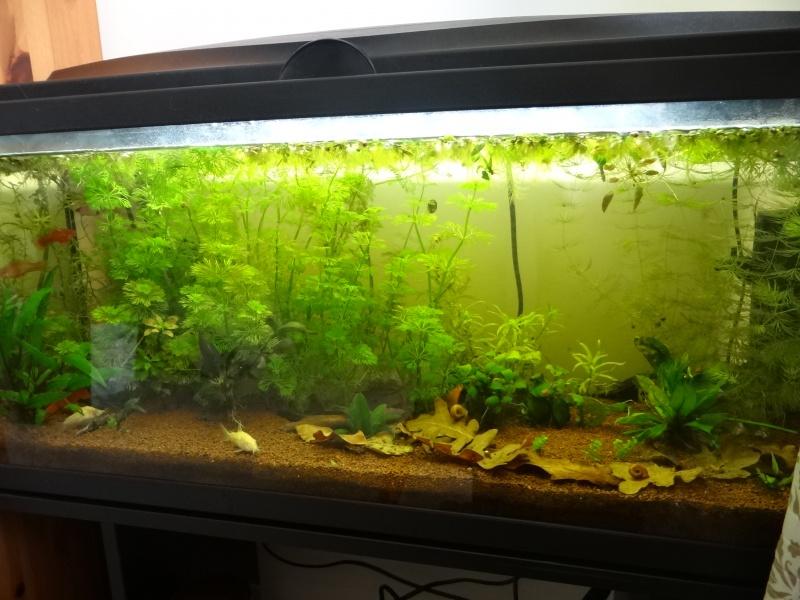 Ma Fish'étagère et les autres  890727DSC05748