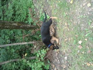 Mon loup I'KAAN et sa Royauté FOX 894470Photo0663