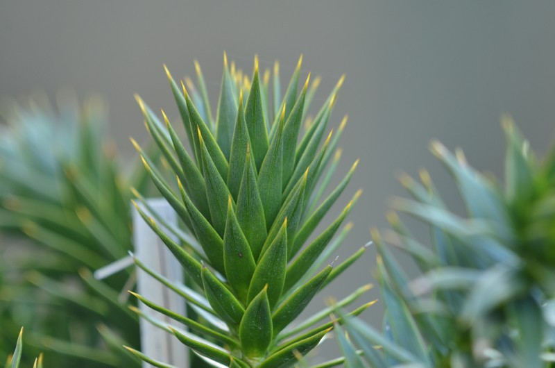 les plantes qui pic 895841035