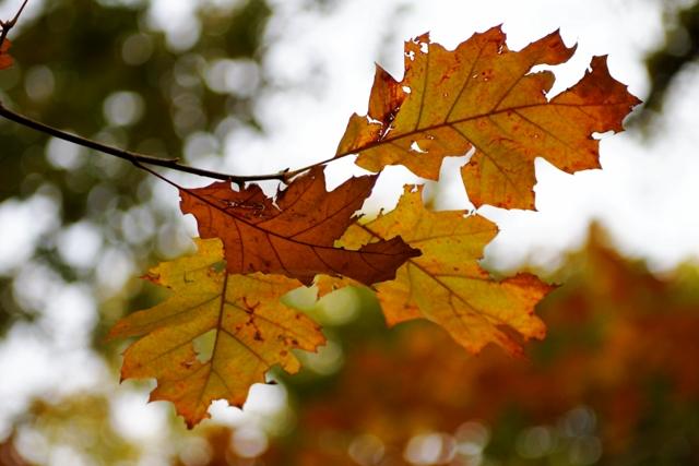 Les couleurs de l'automne 899598IMG_7536_DxO__640x480_
