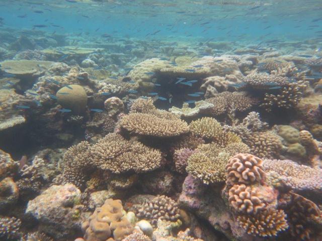 Quelques photos de mes dernières vacances (Maldives) 899639IMG3432