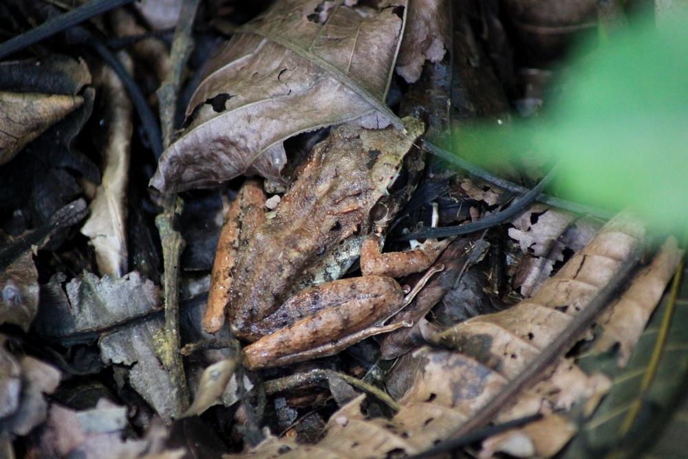 15 jours dans la jungle du Costa Rica 900381crafitz2r